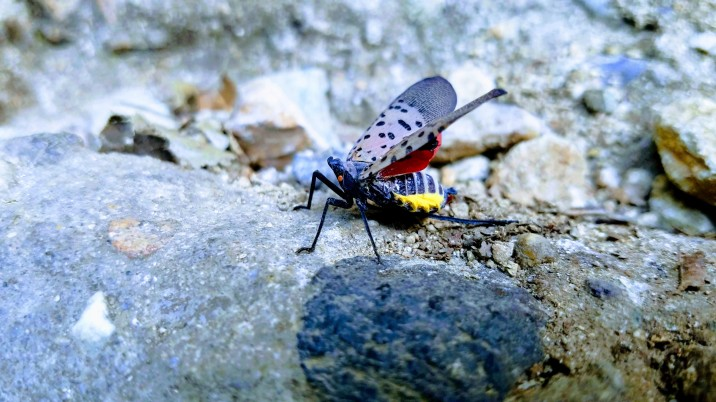 mount apsan unidentified bug1.1
